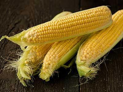 農薬不使用のスイートコーン