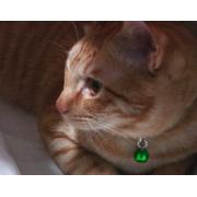 chappy2828さんのプロフィール画像