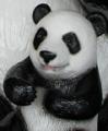 panda@29さん