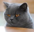 竜巻猫さん