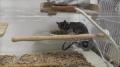 「送料無料 小動物 ハムスター ケージ ハウス 小動物飼育ケース ペットグッズ 透明 小動物 ネズミ 二層 区切り可能 バレンタインデー LS40-2 P00042A3」の商品レビュー詳細を見る