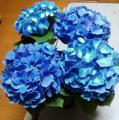 「母の日の新定番として人気上昇!生産者オススメの人気品種!育てやすくて、長くキレイが楽しめます♪≪早得ポイント10倍≫母の日ギフト!選べるあじさい4号鉢 花かご入り♪送料無料【選べる紫陽花(アジサイ)4号鉢 生産者が選んだ人気の4種】花かご入り メッセージプレート付き♪」の商品レビュー詳細を見る