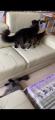 「[正規品]ロイヤルカナン メインクーン成猫用(2kg)」の商品レビュー詳細を見る