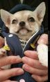 「アカナ パピースモールブリード (小型犬子犬用)2kg【アカナ】」の商品レビュー詳細を見る
