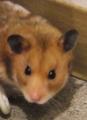 森のネズミさん