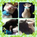 Sleeping_Catsさん