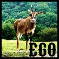 ego→さん