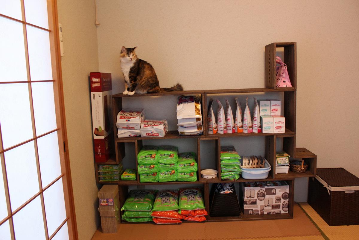 【猫用品収納用】 リピです。家具はほとんどダーク系でまとめているので、いつもダークを購入しています。落ち着いた色合いで気に入っています。今回はまとめ買いをする猫用品をきれいに収納したくて購入しました。猫をあまり入れない和室に設置したのですが、和室にはダークがよく合います。ずっと気になっていたアングル初めて使ってみましたがいい感じに使えました。好きなものを追加できるのもとても魅力です。どれを追加しようか検討中です。【子供部屋 無垢 木製 収納 ラック キューブ カラーボックス 本棚 絵本 おもちゃ 収納 図鑑 大型本】
