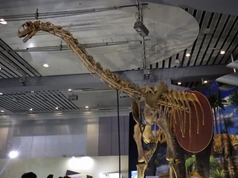 恐竜展2017巨大化の謎にせまる37 トゥリアサウルスの部分骨格(半身)
