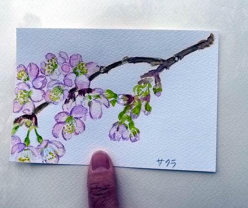 120322善通寺の桜