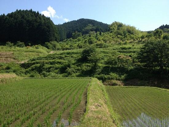 1水田風景5502.jpg