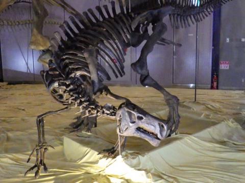 恐竜展2017巨大化の謎にせまる27 プロバクトロサウルスの全身骨格