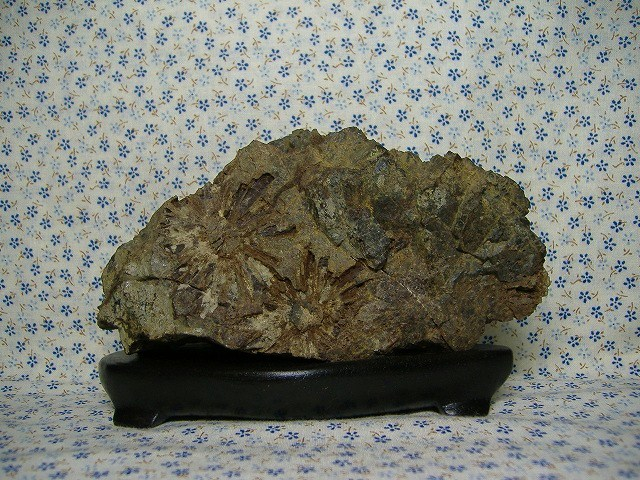 根尾菊花石