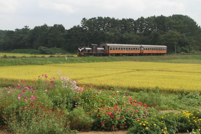 津軽鉄道  実りの秋と 旧型客車2