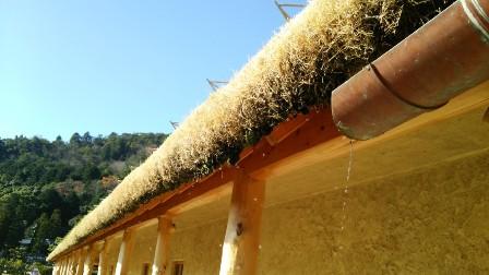 屋根に芝.jpg