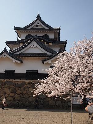 2013年4月 彦根城天守閣と桜.jpg