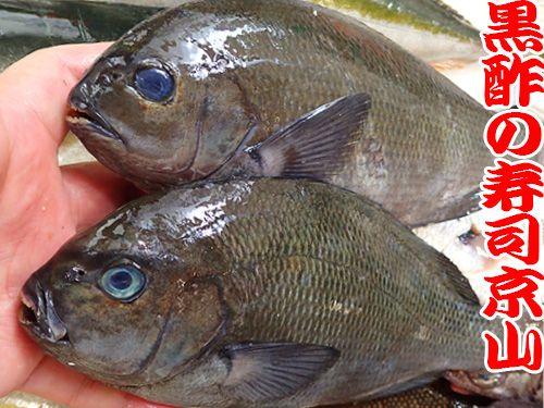 江東区 清澄 天然地魚の寿司