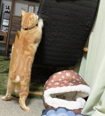 猫ベッド、憐れ・・・