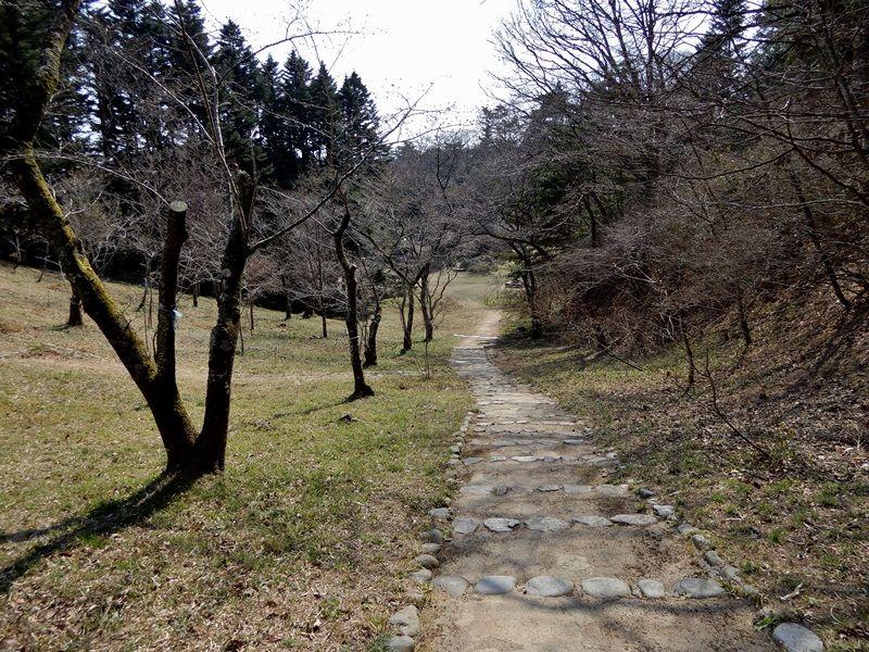 さくら園2