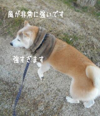 0109夕.jpg