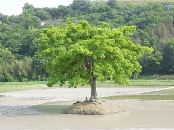この木何の木気になる木-2♪