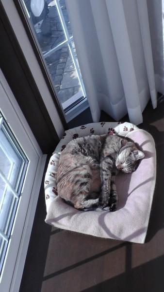 出窓の上で寝る猫