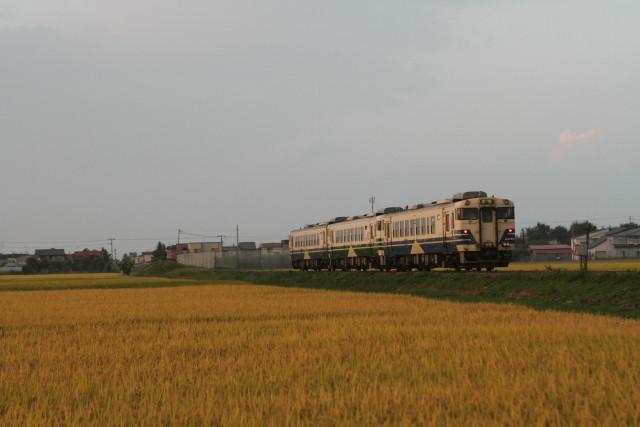 JR五能線 黄金色の稲穂に 旧型 キハ403