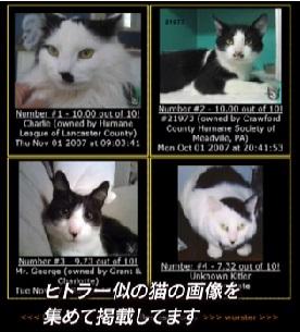 ヒットラー似の猫達 Kitler