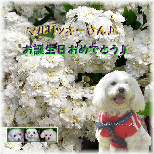20120422誕生日カードekubo19さん
