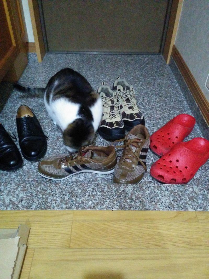 靴フェチな猫2