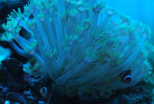 海水120227-1.jpg