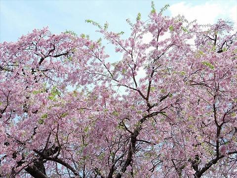 17-04-27 三春10