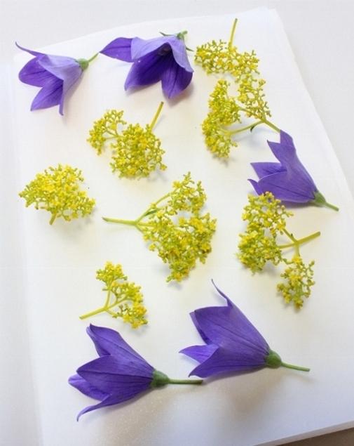 女郎花と桔梗押します。 .jpg