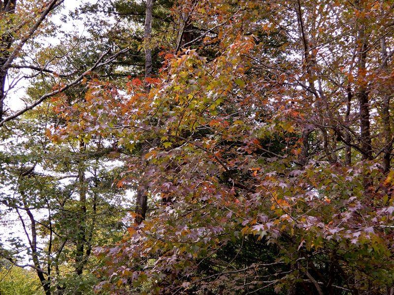 シアトルの森15