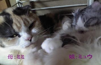 Baidu IME_2012-4-23_22-25-21.jpg