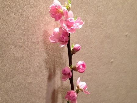 23月8日桃の花 4501.jpg