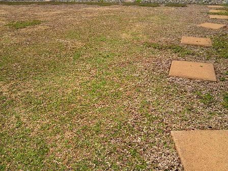 少しずつ緑になってきたクラピアの庭1