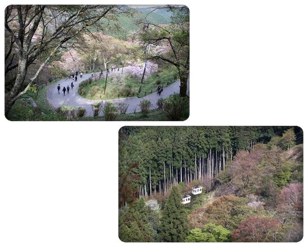 吉野山-27 徒歩かロープーウェイ 16.4.12