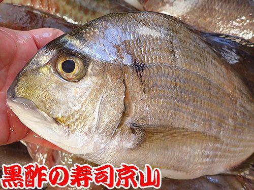 寿司 出前 江東区 辰巳