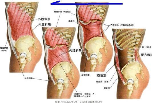 脇腹 の 痛み 左