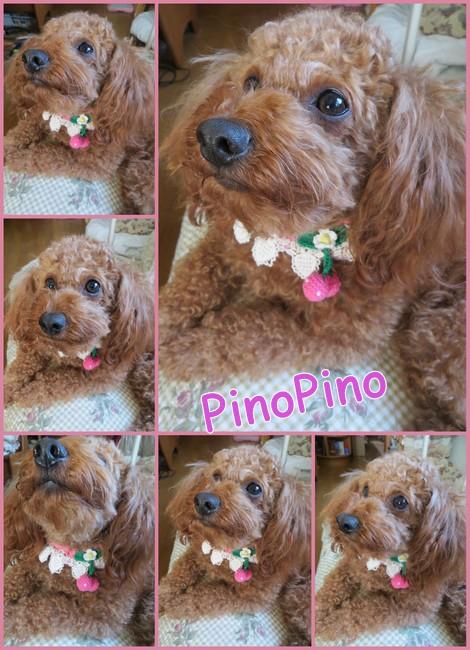 PinoPino2014後期4.jpg
