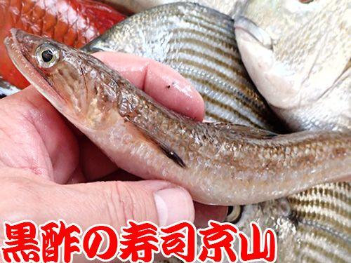 寿司 出前 江東区 森下