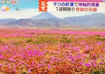 チリの花畑