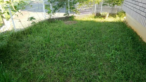 イワダレソウ(クラピアS1)が庭を埋め尽くす