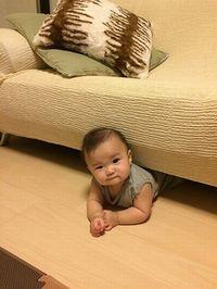 ソファーの下からこんにちは!