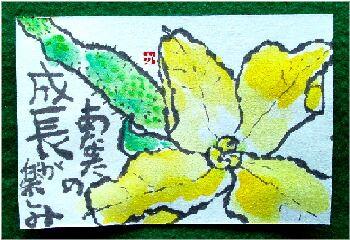 きゅうりの花 3