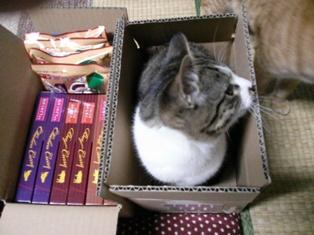箱の中のちっちゃ