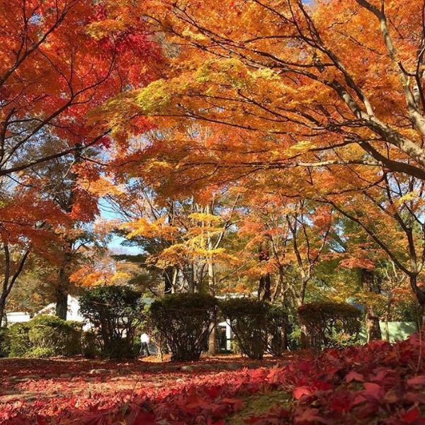 秋田市 千秋公園.jpg