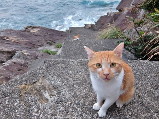猫 背後霊 英語 まったり chill