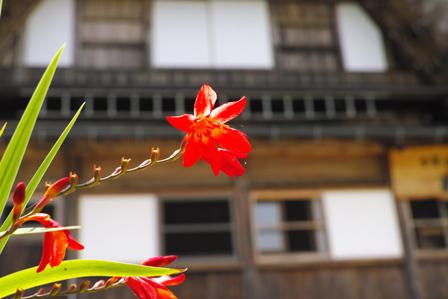 6-1赤い花.jpg